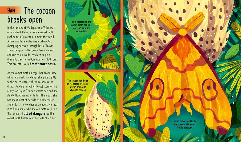 Book pages about a comet moth emerging from its cocoon